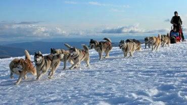 Mansfield & Mt Buller, Top Snow Activities