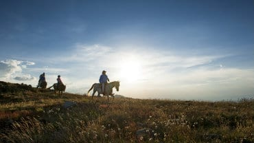 Mansfield & Mt Buller, Summer Holiday Packages