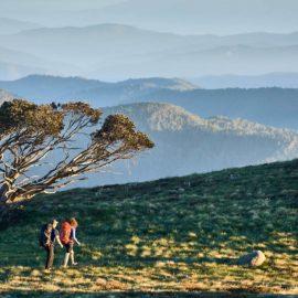 Mt Stirling Summit Loop