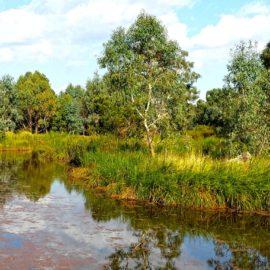 Mansfield Mullum Wetlands