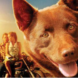 Red Dog Movie Night