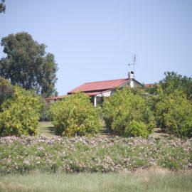 Samaria Farm
